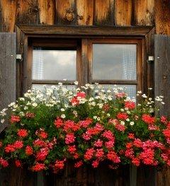 Blumen vor Stadel im Allgäu © Günther Standl