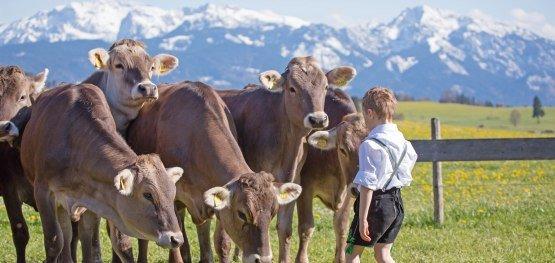 Junge mit Kühen im Allgäu © Sabine Hartmann